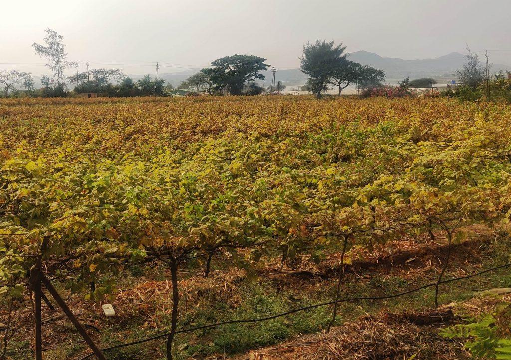soma vine village nashik