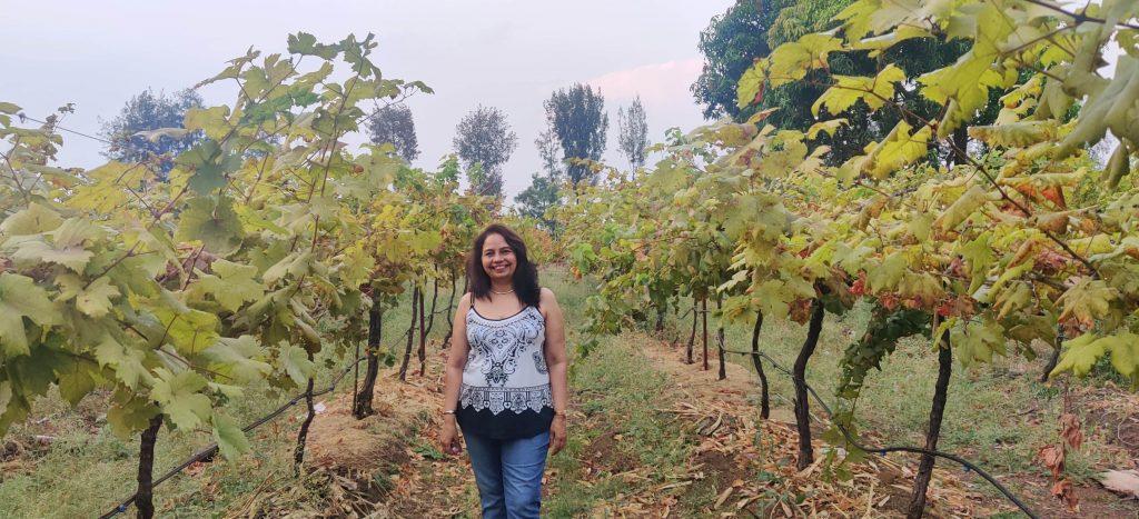 vineyards in nashik